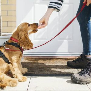 Basic Guidelines for Professional Pet Sitting